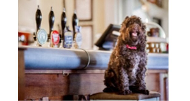 , Prestigious South West Tourism Awards Set To Sniff Out The South West's Most Dog Friendly Pub
