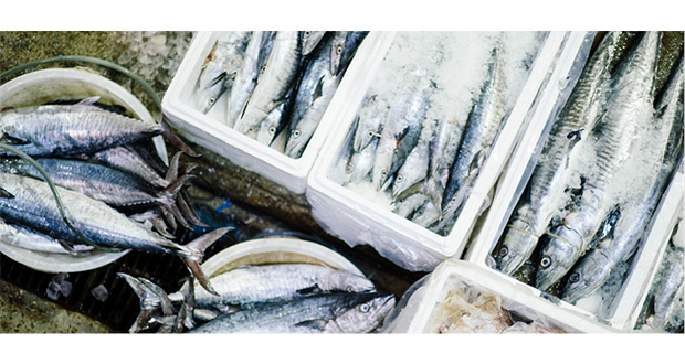 Fish Prices Rise Again Following Quota Changes