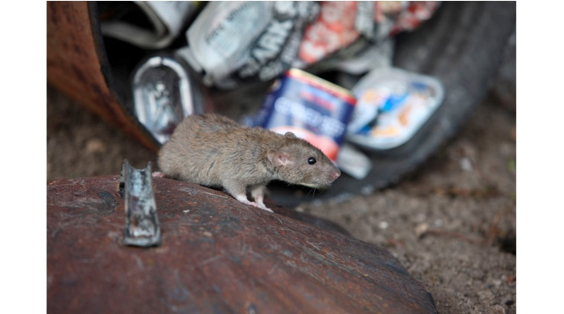Hospitality Warned On Growing Vermin Problem, Hospitality Warned On Growing Vermin Problem